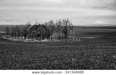 Old Abandoned Farm House In A Plowed Field Surrounded By Trees With A Mountain In The Background
