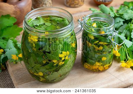 Preparation Of Greater Celandine Alcohol Tincture And Infused Oil