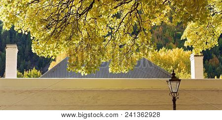 Golden Autumn Leaves In Soft Sunlight Hand Down Over The Roofline Of An Old Heritage Listed Cottage