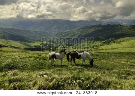Nature Landscape With Wild Horses. Wild Horses In Nature Landscape. Mountain Landscape. Mountain Hor