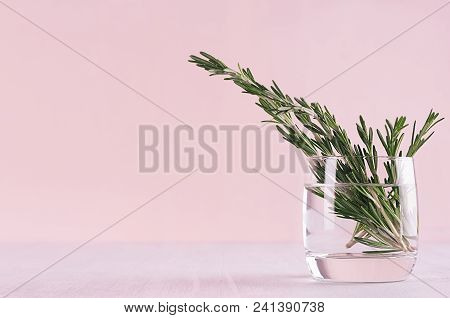 Green Rosemary Twigs In Glass Vase On Soft Pink Pastel Background.