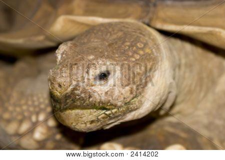 A Tortoise Close Up