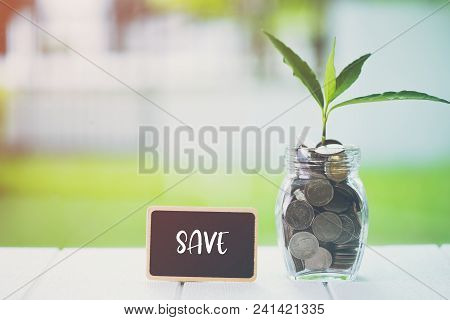 Money Saving And Investment Financial Concept. Plant Growing In Savings Coins With Text Save On Smal