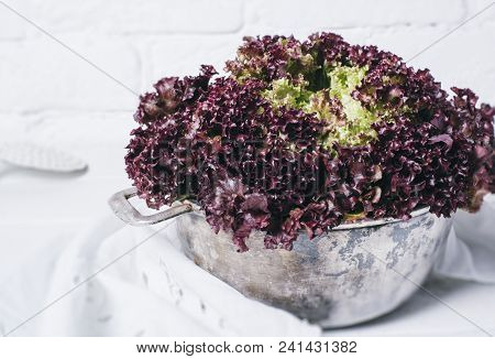 Fresh Red Salad Lettuce Leaves On A Background Of White Brick Wall Top View Close Up