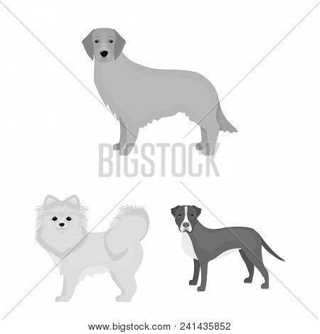 Dog Breeds Monochrome Icons In Set Collection For Design.dog Pet Vector Symbol Stock  Illustration.