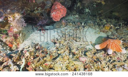 Lionfish On Coral Reef. Dive, Underwater World, Corals And Tropical Fish. Bali, Indonesia. Diving An