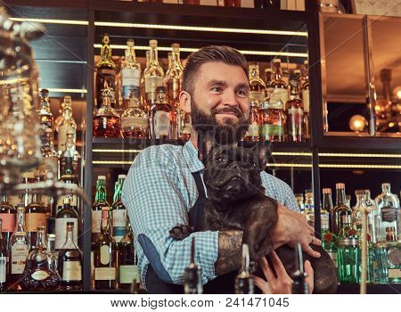 Stylish Brutal Bartender In A Shirt And Apron Keeps Thoroughbred Black Pug At Bar Counter Background