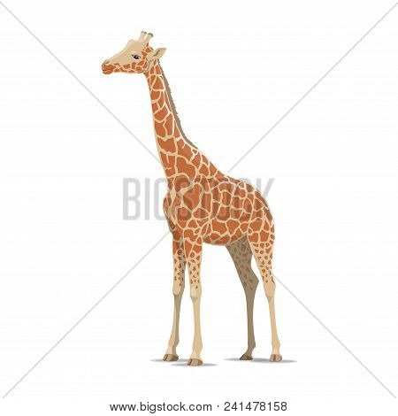 Giraffe Wild Animal Vector Icon Side View. Wild Mammal Giraffes Species For Wildlife Fauna And Zoolo