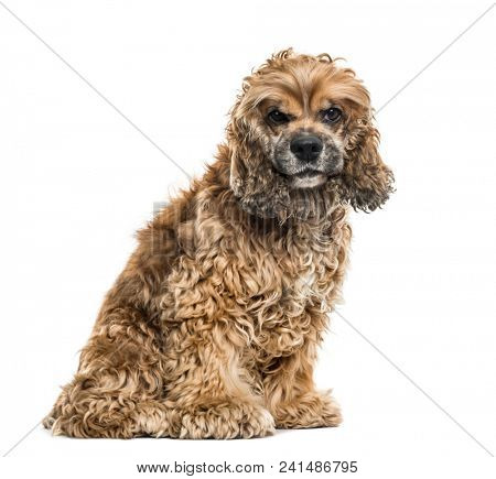 Brown Mixed-breed dog sitting against white background
