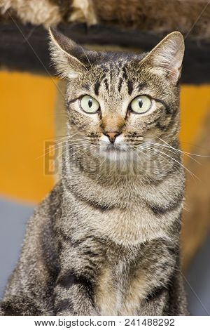 Mutt Cat Waiting For Adoption At A Shelter.