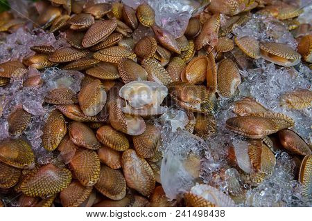 Fresh marine seafood shellfish soaked in ice on the Fresh marine seafood shellfish soaked in ice poster