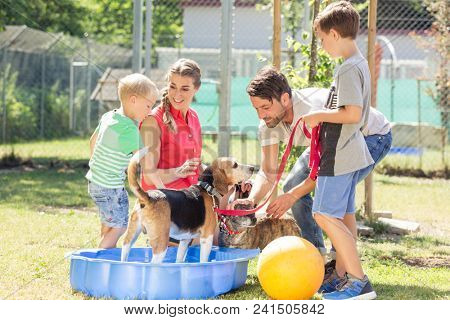 Family playing with dog from animal shelter in pool with water
