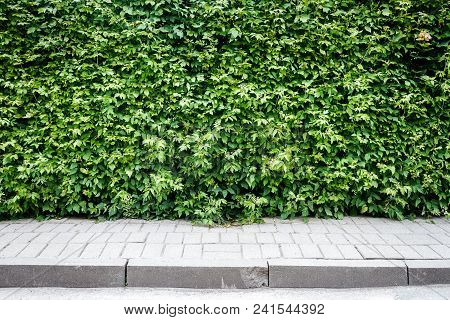 Green Plant Hedge With A Sidewalk Background