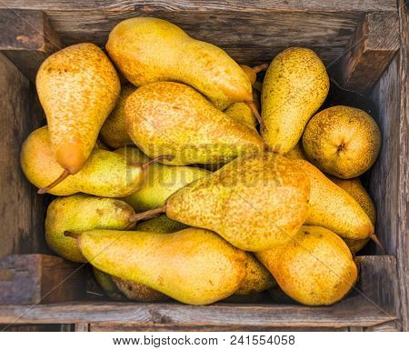 Pears Harvest.  Healthy Organic Pears In The Wooden Box.  Autumn Nature Concept. Top View