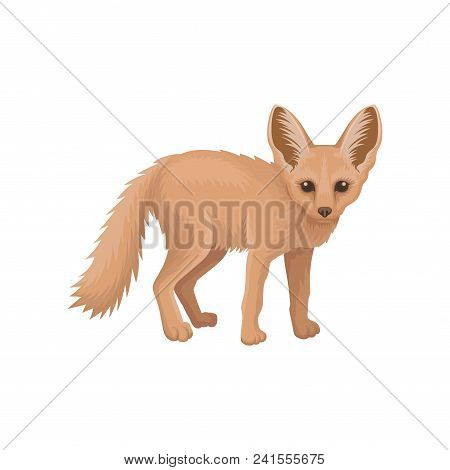 Colorful Illustration Of Cute Fennec. Small Pale Fox With Large Pointed Ears And Fluffy Tail. Wild A