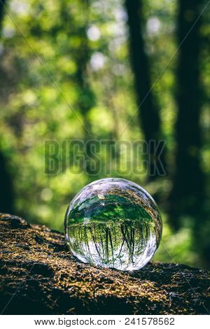Glass sphere with forest reflection in it, standing on a tree. Natural environment. Save the Earth.