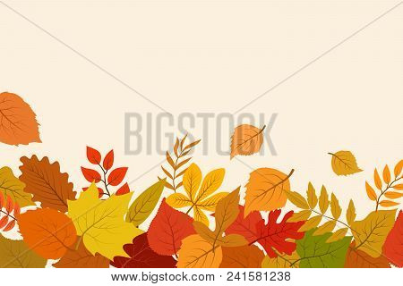 Fallen Gold And Red Autumn Leaves. October Nature Vector Abstract Background With Foliage Border. Au