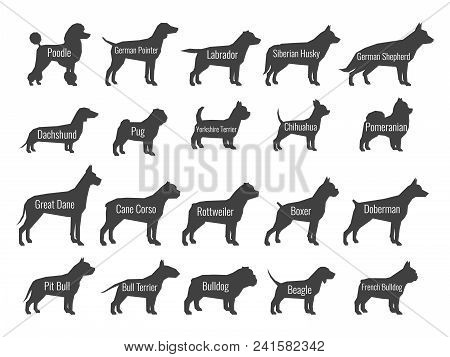 Black Dog Breeds Vector Silhouettes Isolated On White Background. Profile Of Poodle And Labrador, Si