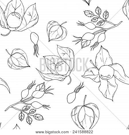 Vector Seamless Pattern With Uncolored Autumn Phyisalis And Dogroses  On White Background.
