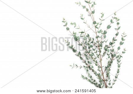 Minimalistic Floral Background Of Green Eucalyptus Leaves Top View. Flat Lay Style.