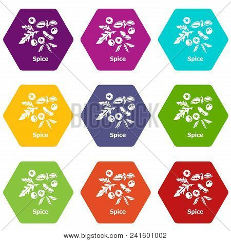 Spice Icons 9 Set Coloful Isolated On White For Web