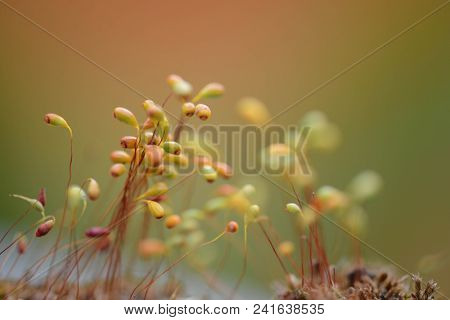 Nature background. Very shallow depth of field.