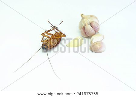 A Garlic Can Chase Cockroaches,close Up Cockroach And Garlic On Isolated Style.