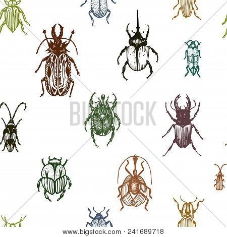Sketch Illustration Of A Vector Bugs. Ornament With Bugs.