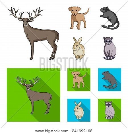 Puppy, Rodent, Rabbit And Other Animal Species.animals Set Collection Icons In Cartoon, Flat Style V