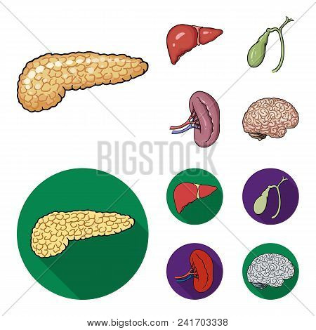 Liver, Gallbladder, Kidney, Brain. Human Organs Set Collection Icons In Cartoon, Flat Style Vector S