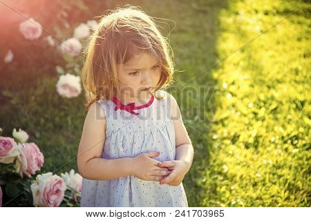 Happy Kid Having Fun. Child With Thinking Face In Blue Dress At Blossoming Roses. Girl Standing On G