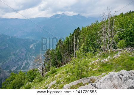 Coniferous Forest Grows On The Slope Of A High Mountain.