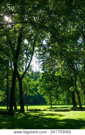 Summer Landscape - City Summer Park With Deciduous Green Park Trees In Sunny Summer Day
