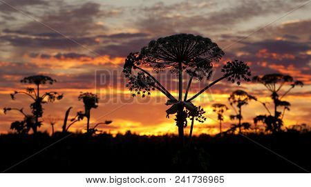 Wild Plants At Sunset In Summer. Evening