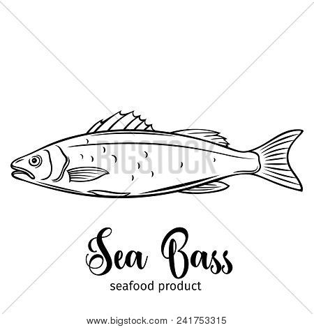 Vector Sea Bass. Hand Drawn Icon Badge Fish For Design Seafood Packaging And Market.