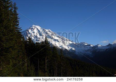 Mt Ranier Over the Trees