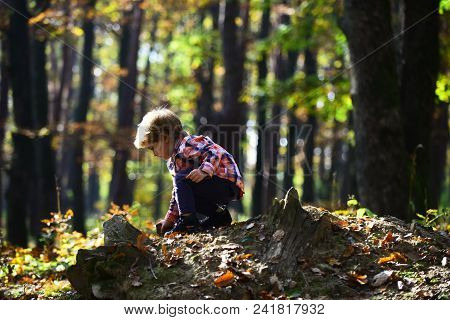 Activity And Active Rest For Kid. Small Boy Play In Autumn Forest. Autumn Vacation And Camping. Litt