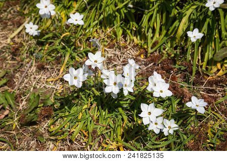 Whiite Flower With Nature Use For Background.,