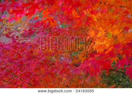 red and orange leaves in autumn