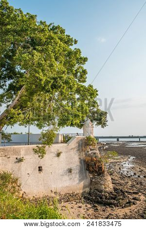 Big Tree At Historic Coast Wall In Casco Viejo In Panama City - Historical Architecture