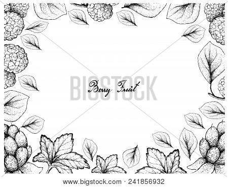 Berry Fruits, Illustration Frame Of Hand Drawn Sketch Delicious Fresh Cloudberry Or Rubus Chamaemoru