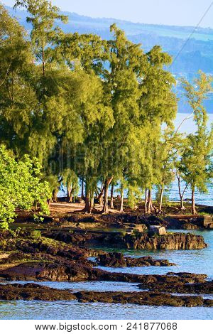 May 17, 2018 In Hilo, Hi:  People Walking In The Park Surrounded By Trees, Plants, And A Rocky Beach