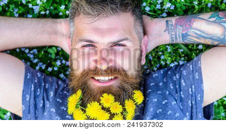 Guy With Dandelions In Beard Relaxing, Top View. Breeziness Concept. Bearded Man With Dandelion Flow