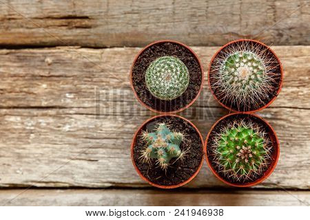 Different Cactus On Wooden Background, Ornamental Plant On Wood Flat Lay Top View. Still Life Natura