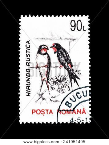 Romania - Circa 1993 : Cancelled Postage Stamp Printed By Romania, That Shows Barn Swallow.