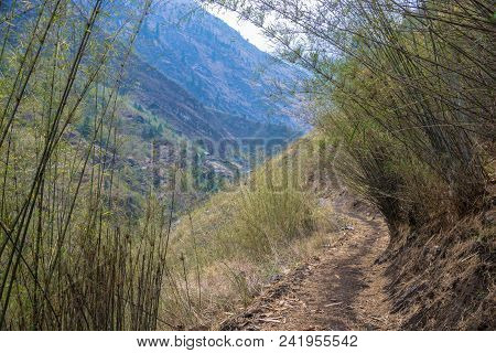 Mountain Trail In Bamboo Thickets On Spring Day, Himalayas, Nepal.