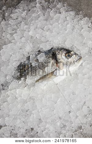 top view of raw gilt-head bream incrushed ice poster