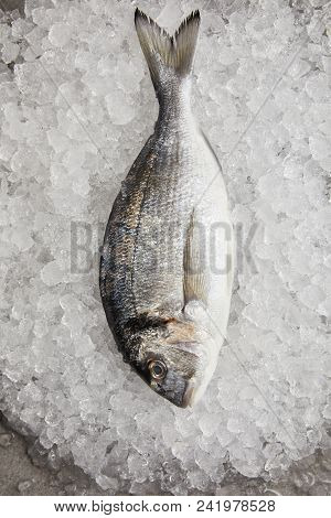 top view of raw gilt-head bream on crushed ice poster