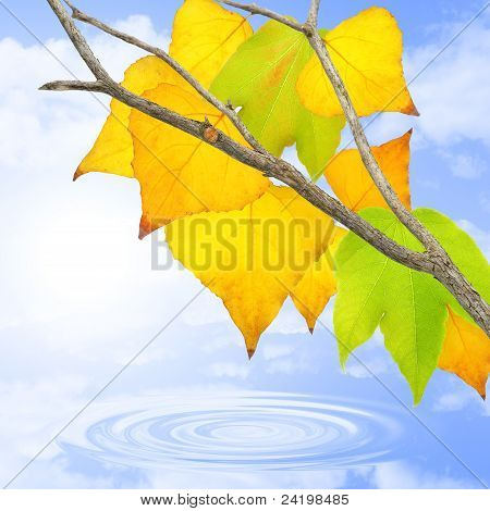 Leaves In October.