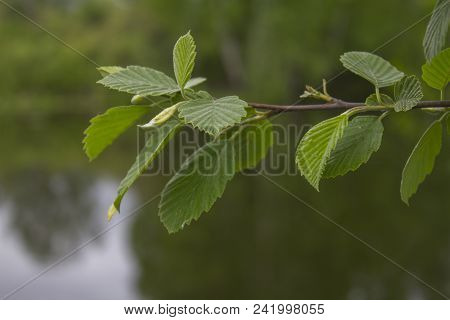 A Photo Of A Green Foliage Close-up. River Backdrop With A Reflection Of Foliage